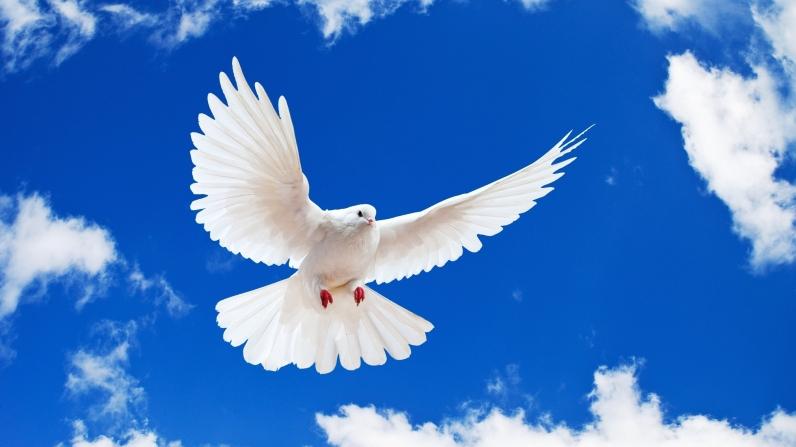 bellissima-colomba-bianca